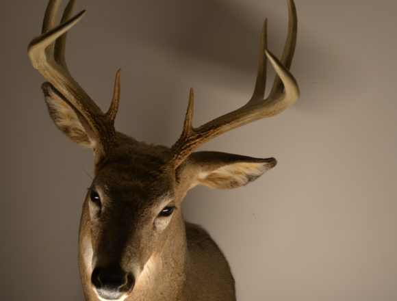 Chronic wasting disease posing potential threat to humans
