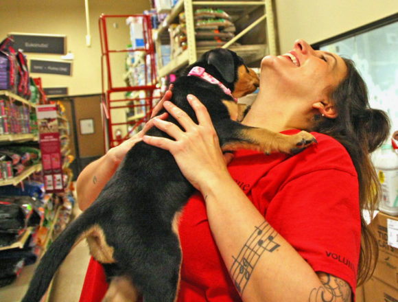 Extreme cold challenges Dog Rescue